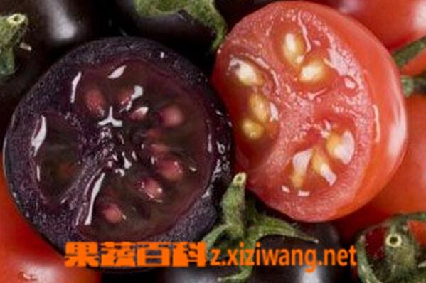 果蔬百科超级西红柿